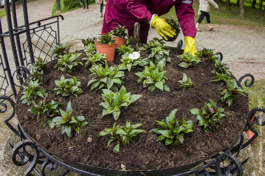 Живое украшение: в Смоленске высадят 113 цветников
